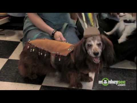 Halloween - Make Your Own Pet Costume