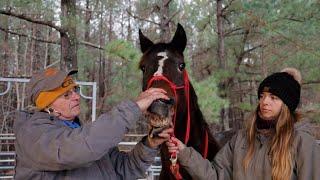 Horse Shelter Heroes  Episode 50  December 1017