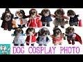 【 nideru 】 【 うろうろ和歌山 】 オリジナル 小型犬 用 コスプレ衣装 で 変身 写…