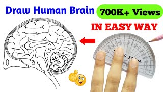 how to draw brąin | how to draw brain easily | how to draw structure of brain