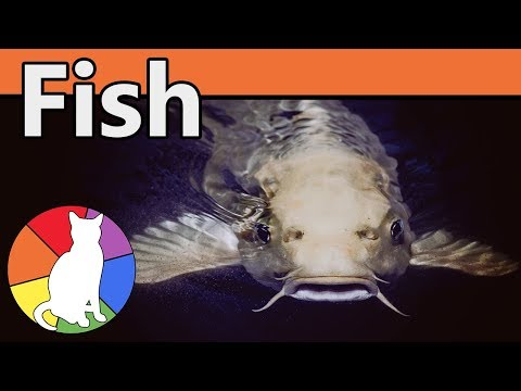 Fish | Animal Fact Files