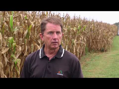 Determining When To Harvest Corn