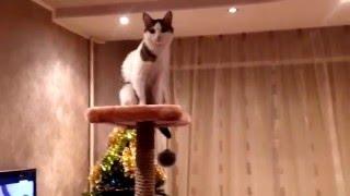 День рождение Маси 1 годик! Кошка радуется своему подарку!Масе домик купили))
