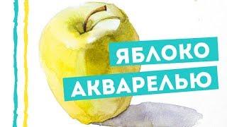 Как нарисовать яблоко акварелью — kalachevaschool.ru — Пошаговый урок Вероники Калачевой