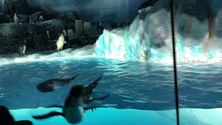 ペンギンコーナー|名古屋港水族館.