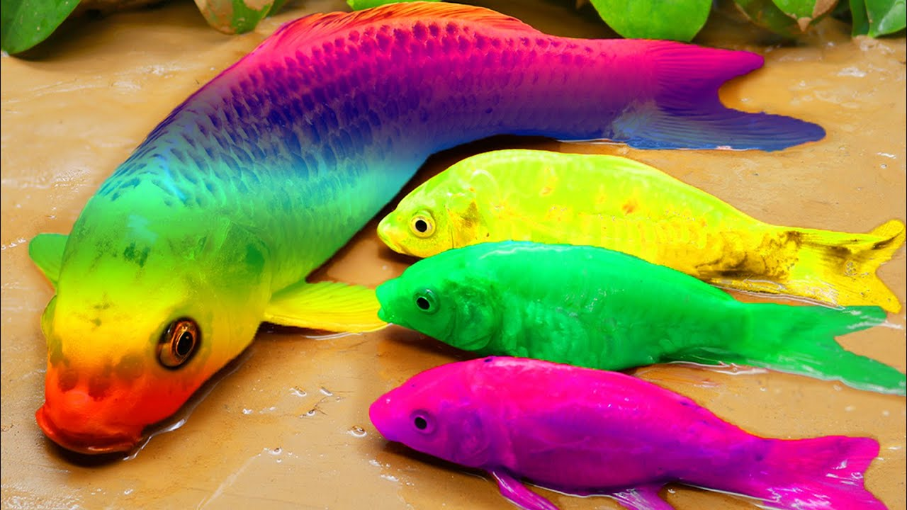 Experiment Rainbow Fish | Catching in Mud: catfish, koi fish Stop Motion ASMR Primitive Cooking