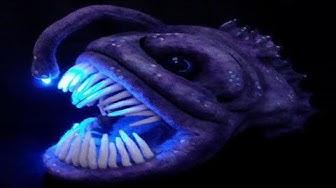 5 Hurjinta syvänmeren eläintä!