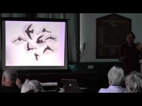 House Martins in Devon  - John Walters and Kevin Cox