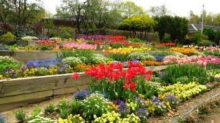 山田池公園の花壇&レンゲの花:野鳥の囀り&ゴスペル♫レーナマリア♫キ...