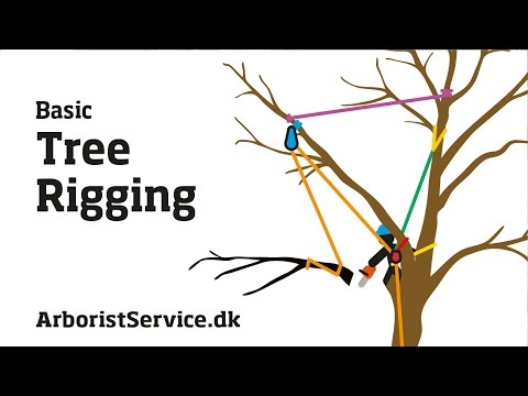 Tree Rigging Techniques - Baum Rigging - Nedfiring fra træ