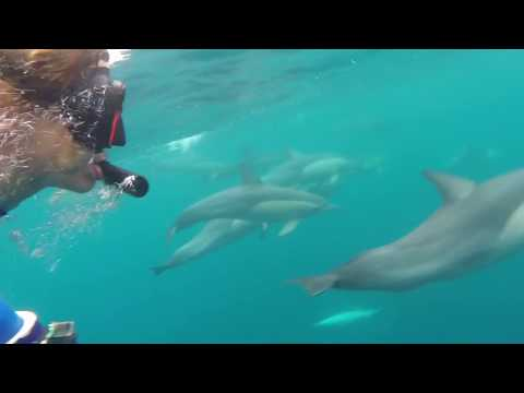 Wild Dolphin Swimming Experience in Port Stephens - Video