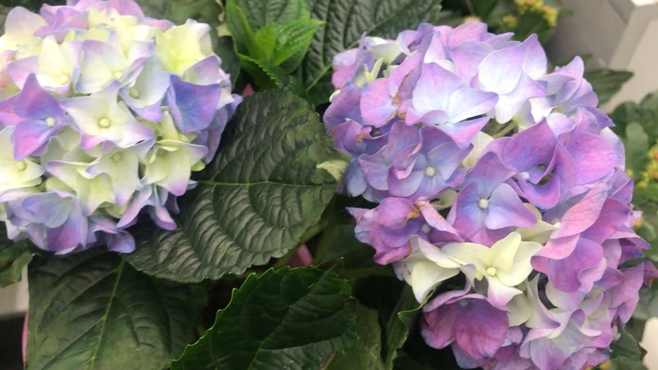 Цветочки к Дню Влюблённых в Бауцентре.