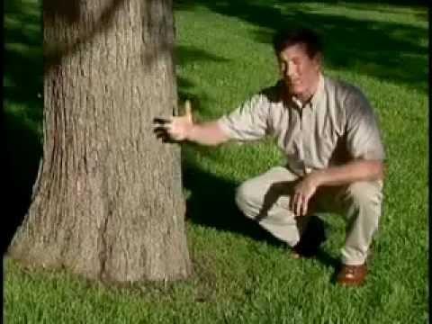 Making A Tree Happy with Tyson Woods - Dirt Doctor, Howard Garrett