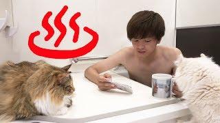 Download lagu 猫と一緒にお風呂入ってみた 新居編 MP3