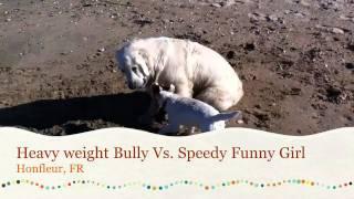 Heavy weight Bully Vs. speedy Funny Girl