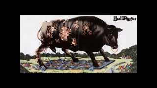 BULL  ANGUS -  Run Don