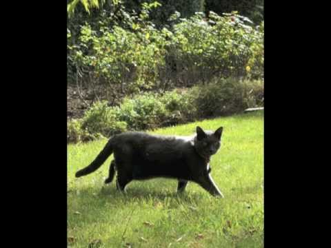 Animal Communicator / The Pet Psychic Introduces Her Animals
