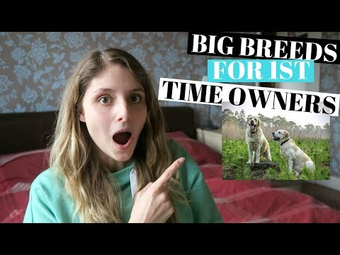 BEST BIG DOGS FOR FIRST TIME OWNERS - 5 BREEDS