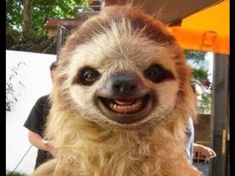 Cute Smiling Animals Is The Best Way To Start Your Day