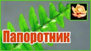 Цветок папоротника. Нефролепис. Комнатные растения. 🌿