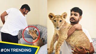 വീട്ടിൽ വളർത്തുന്ന സിംഹം/ Lions In Dubai 😍