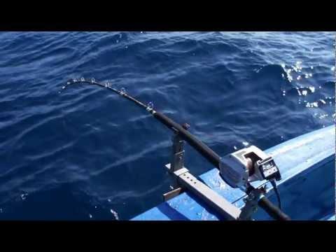 ปลาน้ำลึกกับรอกไฟฟ้า