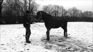 mon cheval, ma vie, mon tous... mp3