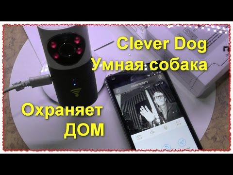 Clever Dog Умная собака WiFi Smart IP камера. Охраняет дом и не только