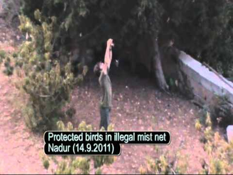 Illegal Bird Hunting And Trapping On Malta In September 2011 Filmed By CABS