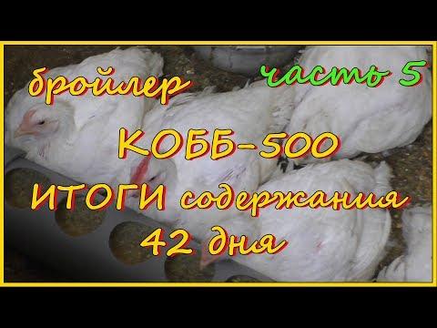 Бройлеры КОББ-500. ИТОГИ содержания. 42 дня. Часть 5.