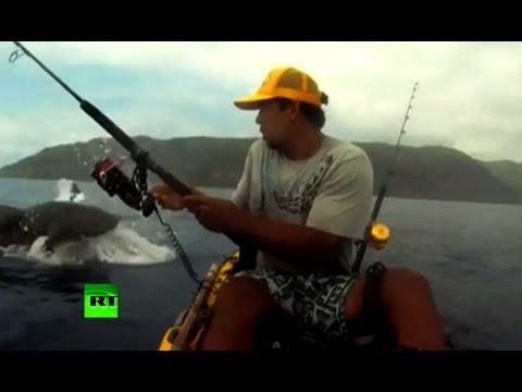 Акула украла призовую добычу на турнире рыболовов (ВИДЕО)
