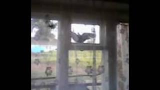 Голубь летит в окно (12.07.2016)
