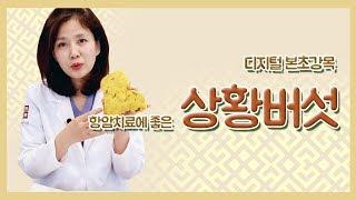 한의사 김소형이 알려주는 상황버섯 효능!