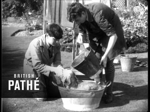 Wash Day - Some Doggy Hints From Haslemere (1933)