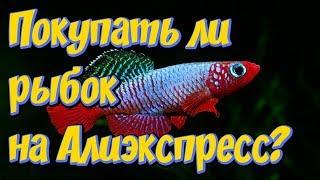 Живые аквариумные рыбки  с Алиэкспресс! Обман или правда! Стоит  покупать или это развод от Китайцев