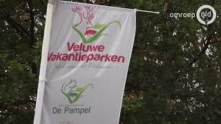 Zwijnen vernielen camping op de Veluwe