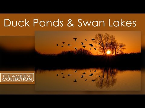 Relaxation DVD - Duck Ponds & Swan Lakes With Bird And Nature Sounds