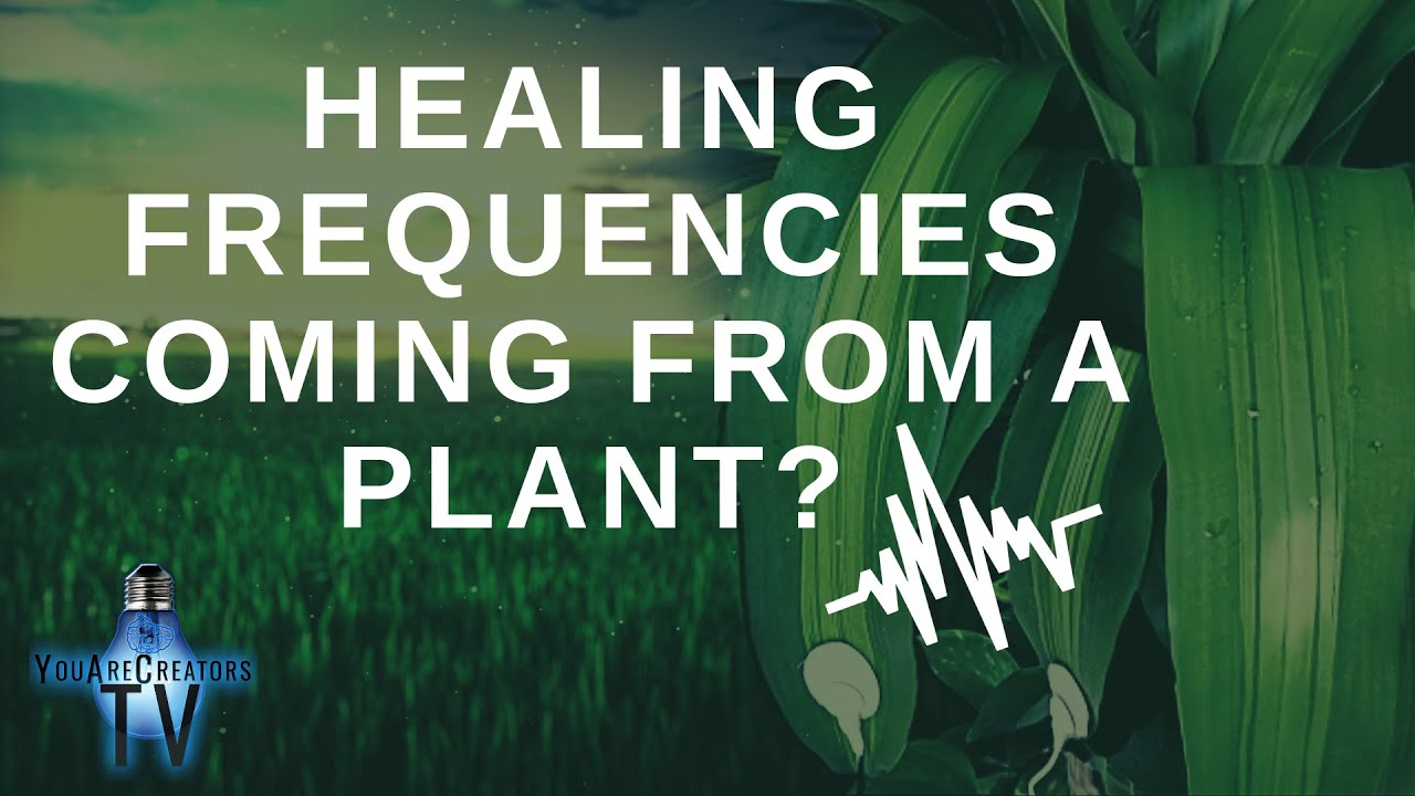 Healing Frequencies coming from a Plant? (Powerful Frequencies!)