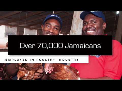 Support Jamaica's Poultry Industry
