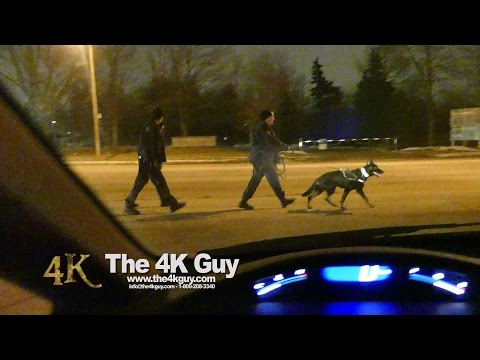 North York: K9 canvassing after shooting 1-24-2016