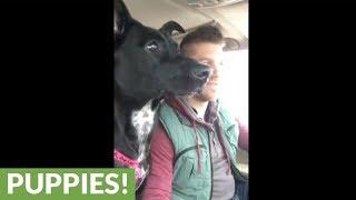 Dog realizes she's at dog park, loses her mind