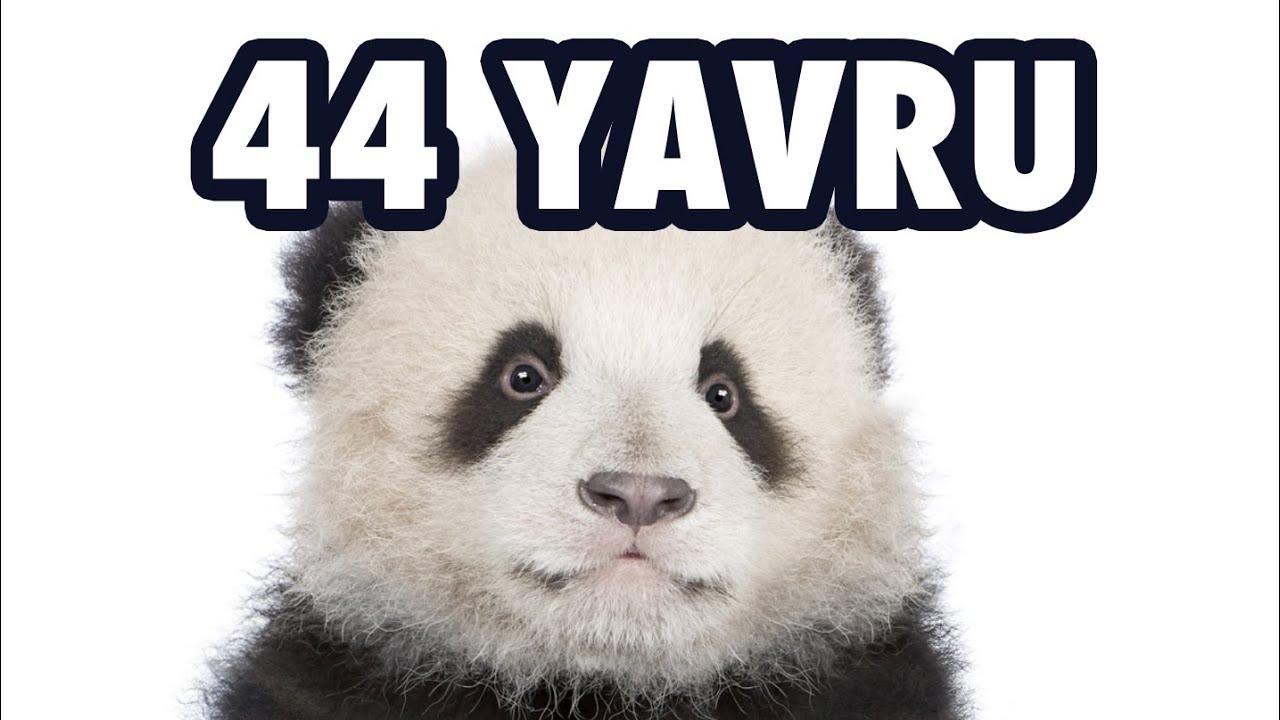 22 Hayvan 44 Yavru Youtube