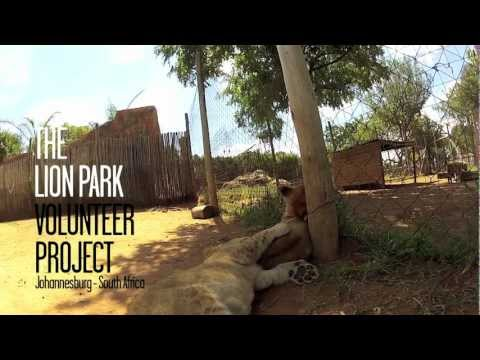 The Lion Park Volunteer Project - A documentary by Bruno Cirello and Roberta Xavier