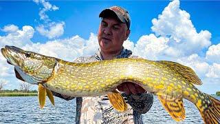 Рыбалка ОГРОМНЫЕ ЩУКИ КЛЮЮТ ОДНА за ДРУГОЙ