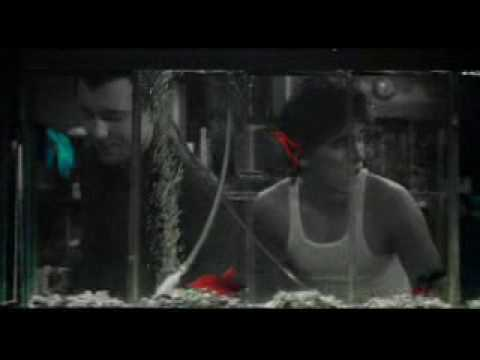 Rumble Fish [Motorcycle Boy Explaining 'Rumble Fish']