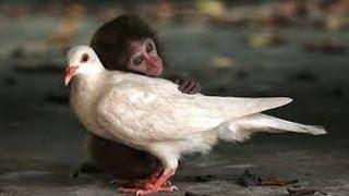 Дети и животные.Смешное видео.