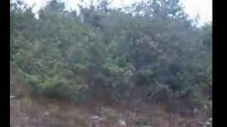 Kopoy(beagle) Ile Tavşan Avı; Yavru Alıştırma