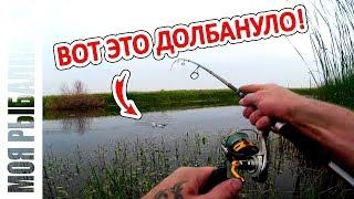 видео Ловля хищника поверхностными приманками