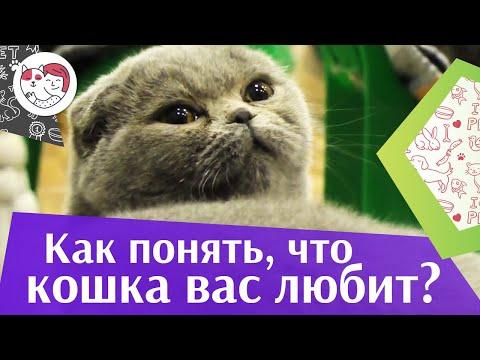 5 признаков кошачьей любви на ilikepet