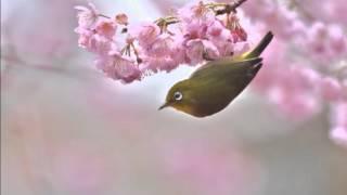 杉並児童合唱団 - 春の風